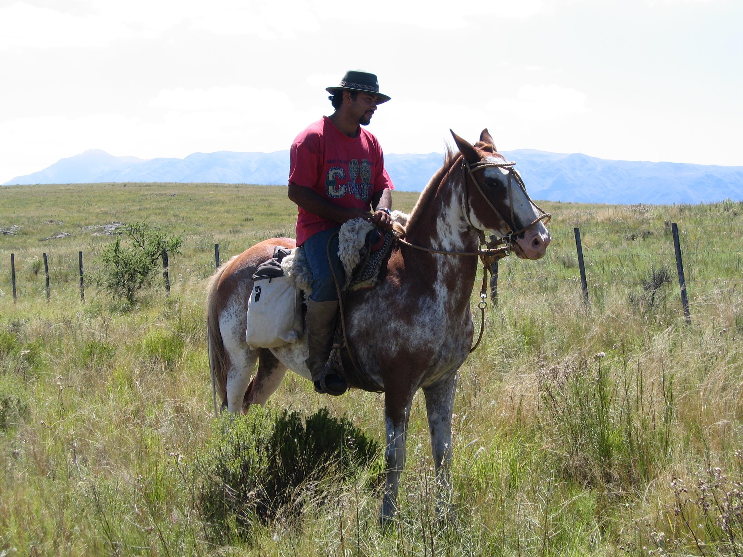Caballos for Monturas para caballos
